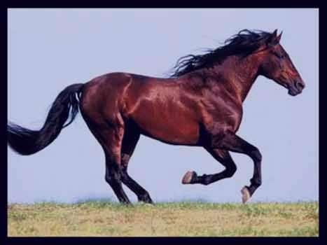 تعبیر خواب اسب