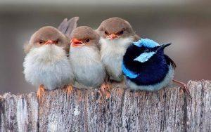 ,تعبیر خواب پرنده,تعبیر خواب پرنده مرده,تعبیر خواب پرنده سفید,تعبیر خواب پرنده سبز رنگ,تعبیر خواب پرنده بزرگ,تعبیر خواب پرنده رنگارنگ,تعبیر خواب پرنده در قفس,تعبیر خواب پرنده زیبا,تعبیر خواب پرنده سخنگو,تعبیر خواب پرنده سفید بزرگ,تعبیر خواب پرنده مرده در قفس,تعبیر خواب زنده شدن پرنده مرده,تعبیر خواب پرندگان مرده,تعبیر خواب پرنده مردن,تعبیر خواب پرنده ی مرده,تعبیر خواب پرنده های مرده,تعبير خواب مردن پرنده,تعبیر خواب مردن پرندگان,تعبیر خواب گرفتن پرنده از مرده,تعبیر خواب پرنده سفید زیبا,تعبیر خواب پرنده سفید کوچک,تعبیر خواب پرنده سفید در قفس,تعبیر خواب پرنده سفید و سیاه,تعبیر خواب پرنده سفید سخنگو,تعبیر خواب پرنده سفید رنگ,تعبیر خواب پرندگان سفید,تعبیر خواب پرنده سفيد,تعبیر خواب پرنده بزرگ سیاه,تعبیر خواب پرنده بزرگ سفید,تعبیر خواب پرنده بزرگ رنگی,تعبیر خواب پرنده بزرگ و سیاه,تعبیر خواب پرندگان بزرگ,تعبیر خواب پرنده های بزرگ,تعبیر خواب پرنده خیلی بزرگ,تعبیر پرنده بزرگ در خواب,تعبیر خواب دیدن پرنده بزرگ,تعبير خواب پرنده رنگارنگ,تعبیر خواب پرندگان رنگارنگ,تعبیر خواب پرنده رنگی,تعبير خواب پرنده رنگي,تعبیر خواب پرنده های رنگارنگ,تعبیر خواب پرنده های رنگی,تعبیر خواب پرنده ی رنگی,تعبیر خواب گرفتن پرنده رنگارنگ,تعبیر خواب دیدن پرنده رنگارنگ,تعبير خواب پرنده در قفس,تعبیر خواب پرندگان در قفس,تعبیر خواب دیدن پرنده در قفس,تعبیر خواب پرنده از قفس پریدن,تعبیر خواب پرنده تو قفس,تعبیر خواب پرنده و قفس,تعبیر خواب پرنده زیبا در قفس,تعبیر خواب پرندگان زیبا,تعبير خواب پرنده زيبا,تعبیر خواب گرفتن پرنده زیبا,تعبیر خواب دیدن پرنده زیبا,تعبیر خواب پرنده های زیبا,تعبیر پرنده زیبا در خواب,تعبیر خواب پرنده ی زیبا,تعبير خواب پرنده سخنگو,تعبیر خواب طوطی سخنگو,تعبير خواب طوطي سخنگو,تعبیر دیدن پرنده سخنگو در خواب,تعبیر خواب طوطی سبز سخنگو,تعبیر پرنده سخنگو در خواب