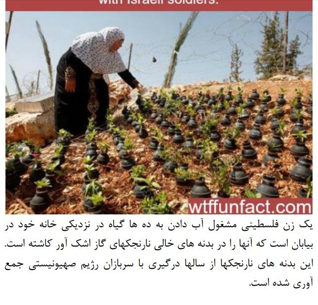 ابتکار یک زن فلسطینی در کاشت گیاه در بدنه نارجک